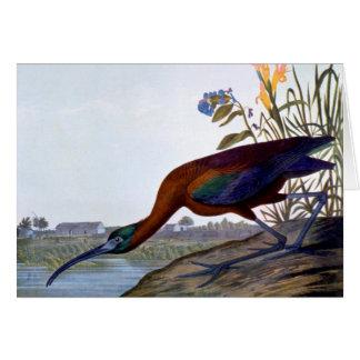 Audubon: Glossy Ibis Card