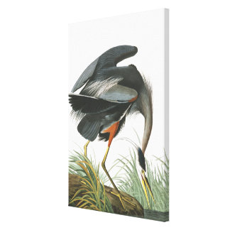 Audubon Great Blue Heron Bird Wrapped Canvas Print