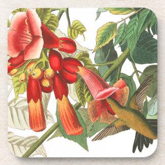 Audubon Hummingbird Birds Wildlife Floral Coaster