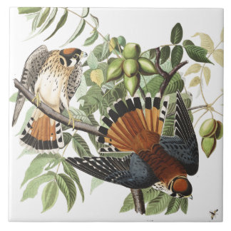 Audubon Kestral Birds Wildlife Animals Tile