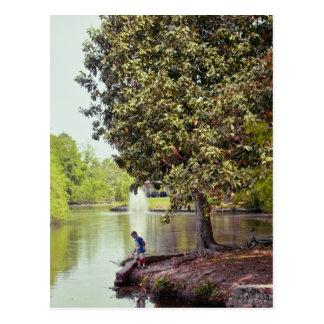 Audubon Lagoon Postcard