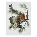 Audubon Owls Poster