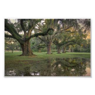 Audubon Park Rain Photo Print