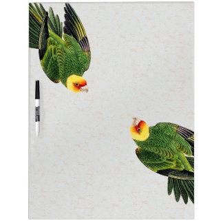 Audubon Parrot Bird Wildlife Dry Erase Board