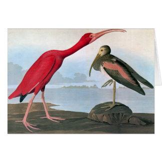 Audubon: Scarlet Ibis Card
