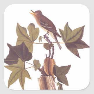 Audubon Trail's Flycatcher Square Sticker