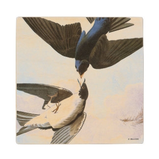 Audubon: Tree Swallow Wood Coaster