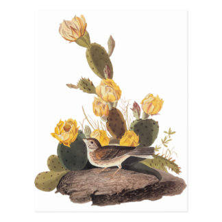 Audubon Vesper Sparrow and Prickly Pear Cactus Postcard