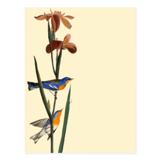 Audubon: Warbler Postcard