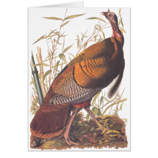 Audubon Wild Turkey Card