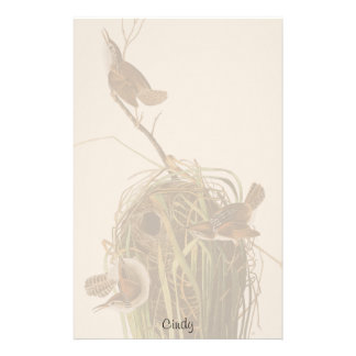 Audubon Wren Birds Nest Wildlife Stationery