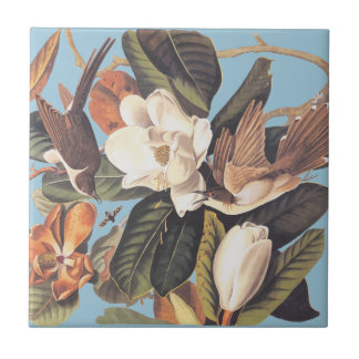 Audubon's Black Billed Cuckoo Small Square Tile