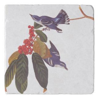 Audubon's Cerulean Warbler Bird Pair with Berries Trivet