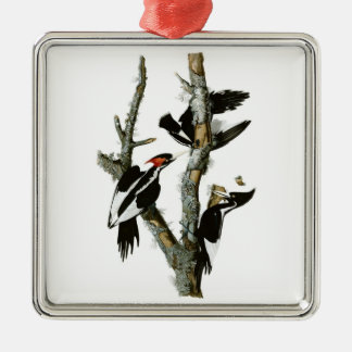Audubon's Ivory-billed Woodpecker Silver-Colored Square Decoration