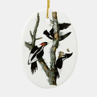 Audubon's Ivory-billed Woodpecker Ceramic Oval Decoration