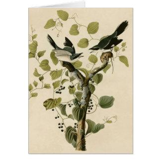 Audubon's Loggerhead Shrike Card