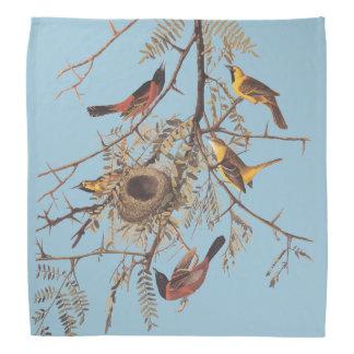 Audubon's Orchard Oriole Birds in Honey Locust Bandana