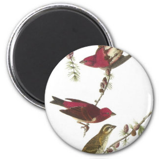 Audubon's Purple Finch Fridge Magnets