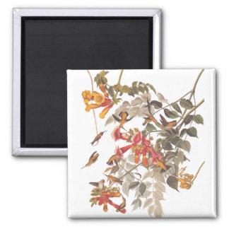 Audubon's Tropical Ruby Throated Hummingbirds Square Magnet