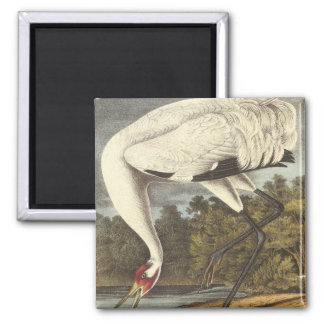 Audubon's Whooping Crane Magnets
