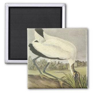 Audubons' Wood Stork Fridge Magnet