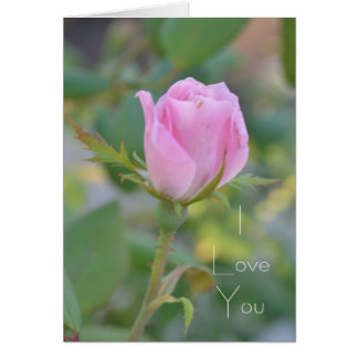 August Pink Rose Bud I Love You Card
