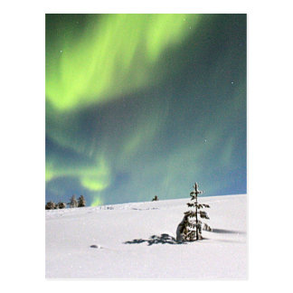 Aurora Borealis green Northern lights snowscape Postcard