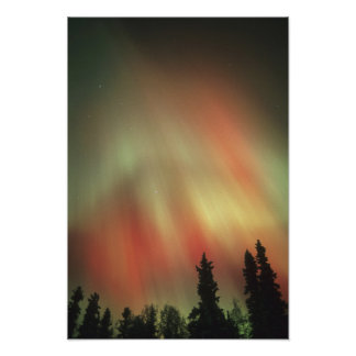 Aurora Borealis, Northern Lights, Fairbanks Poster
