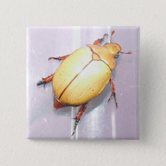 Aussie Christmas Beetle Badge. 15 Cm Square Badge