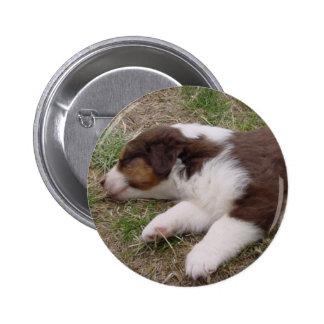 aussie puppy sleeping pins