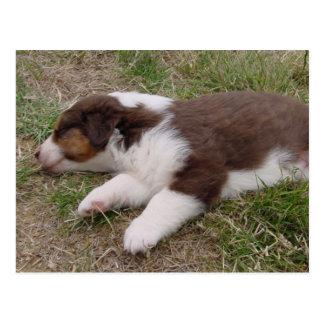 aussie puppy sleeping postcard