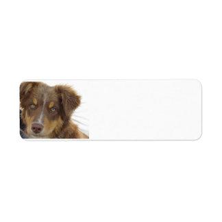 aussie red tri pup return address label