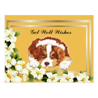 Aussie Red Tri Puppy Get Well Postcard