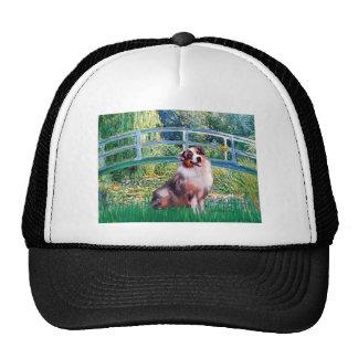 Aussie Shep 1 - Bridge Hat