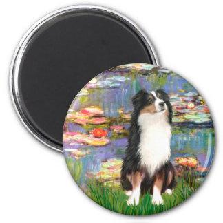Aussie Shep 2 - Garden 6 Cm Round Magnet