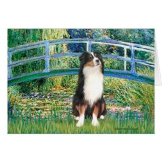 Aussie Shep (Tri2) - Bridge Greeting Card