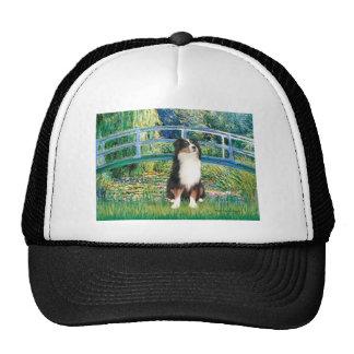 Aussie Shep (Tri2) - Bridge Mesh Hat