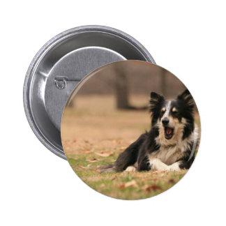 Aussie Shepherd Dog  Pin