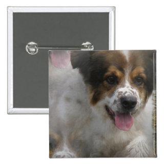 Aussie Shepherd Puppy Pin