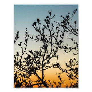 Austin Sunset in Winter Photo