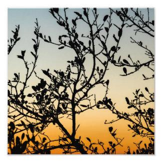 Austin Sunset in Winter Photo Art