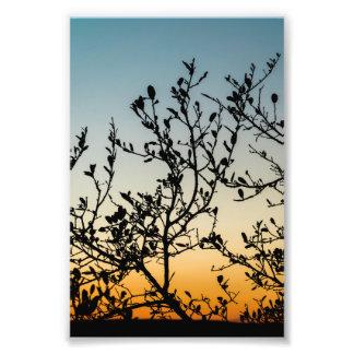 Austin Sunset in Winter Photographic Print