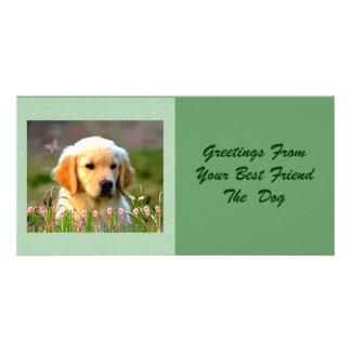 Austin The Golden Labrador Customized Photo Card