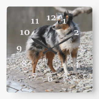 Austraalian Shepherd Square Wall Clock