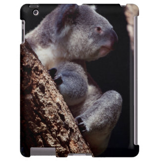 Australia, Close-Up of Koala (Phascolarctos