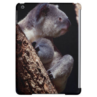 Australia, Close-Up of Koala (Phascolarctos