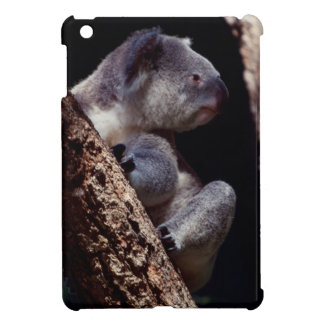 Australia, Close-Up of Koala (Phascolarctos Cover For The iPad Mini