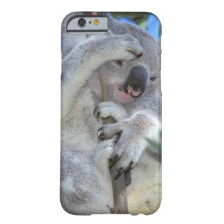 Australia, Koala Phasclarctos Cinereus) Barely There iPhone 6 Case