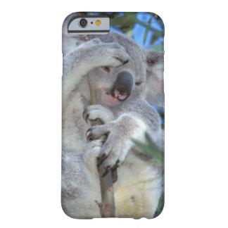 Australia, Koala Phasclarctos Cinereus) iPhone 6 Case