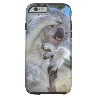 Australia, Koala Phasclarctos Cinereus) Tough iPhone 6 Case